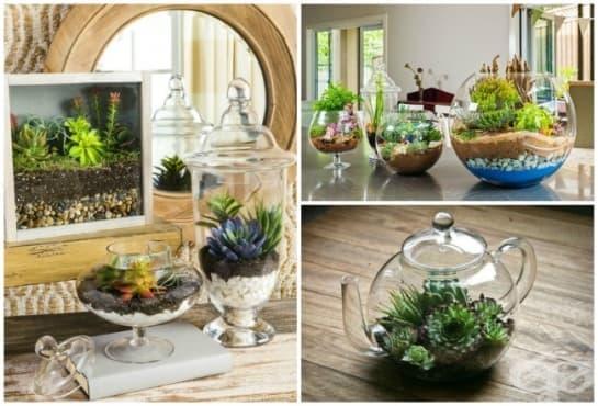 Как да направите миниатюрна градина, която да внесе уют и хармония във всеки дом - изображение