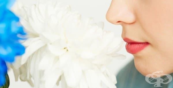 7 неподозирани факта за обонянието и миризмите - изображение