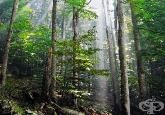 10 мита за оцеляване в дивата природа, които могат да ви убият – I част - изображение