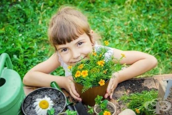 Монтесори у дома: Пролетни занимания за децата - изображение