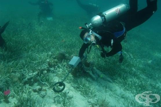 200 римски амфори са открити в подводна пещера в близост до Майорка - изображение