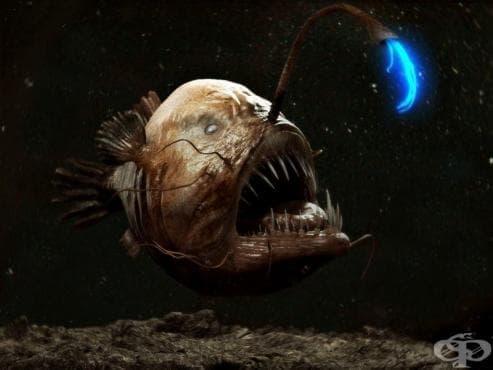 Вижте 7 от най-отблъскващите и ужасяващи океански създания - изображение