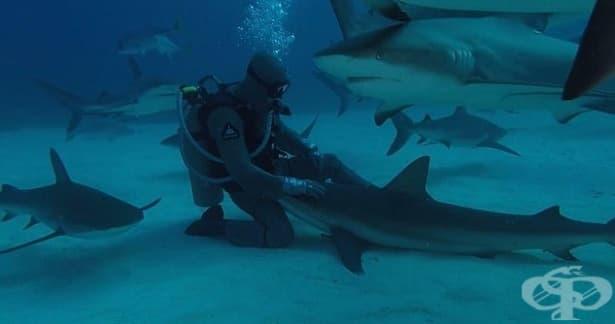 Морски биолог гали акула край Бахамските острови - изображение