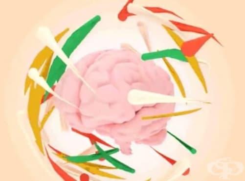 """Учените откриха бутона """"Изтриване"""" в мозъка. Внимавайте за какво мислите! - изображение"""