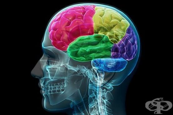 5 мита за мозъка, които трябва да разбием веднъж завинаги - изображение