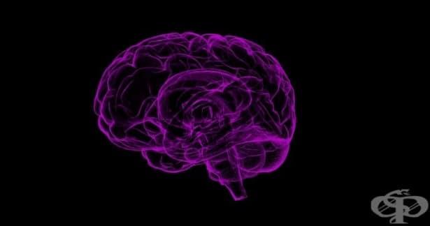 Мозъчното увреждане е широкоразпространен проблем при контактните спортове - изображение
