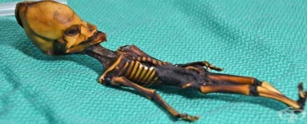 """Разгадаха произхода на """"извънземния"""" скелет, открит в пустинята Атакама - изображение"""