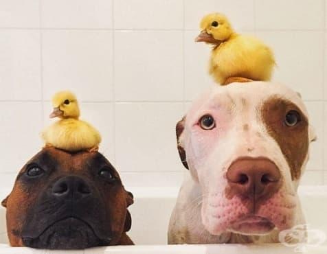 Животни, които доказват, че различията нямат значение – I част - изображение