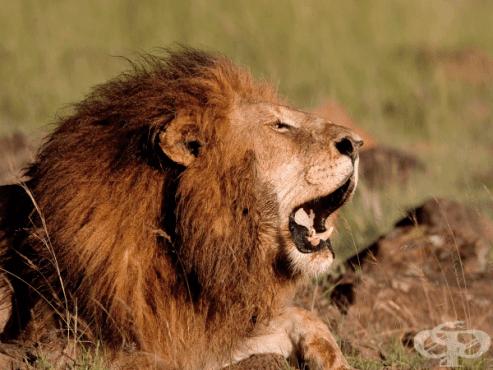 15-те най-смъртоносни животни на планетата - изображение