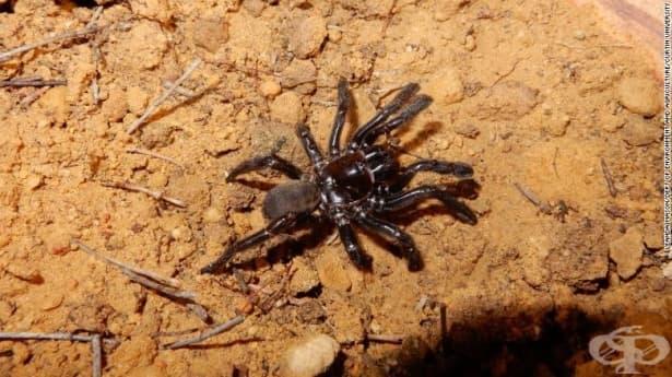 Почина най-старият паяк в света - изображение