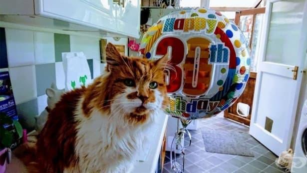 Запознайте се с Рубъл – най-старата котка, която навърши 30 години - изображение