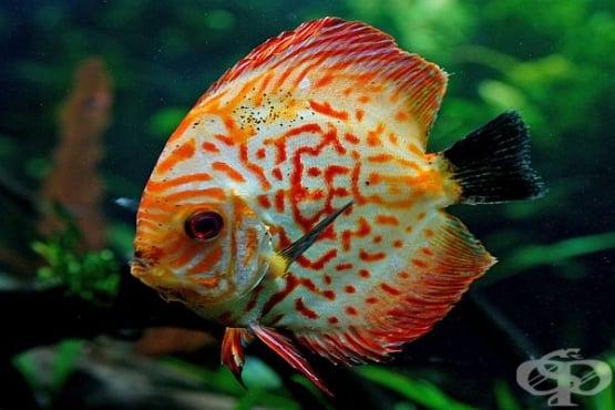 Кои са най-красивите морски създания на света - изображение