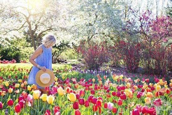 Изберете най-подходящите цветя за вашата градина - изображение