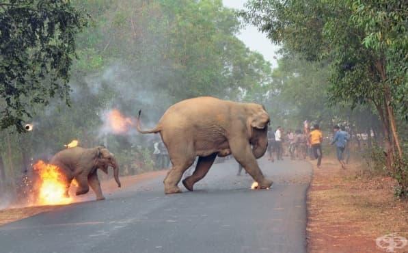 Битка за оцеляване: Конфликтът между хората и слоновете уловен в един кадър - изображение