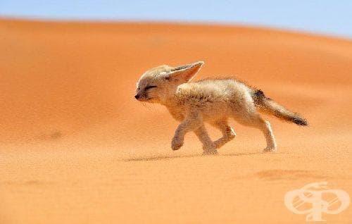 """Най-добрите снимки на дивата природа, участващи в конкурса """"National Geographic Traveler Photo"""" - изображение"""