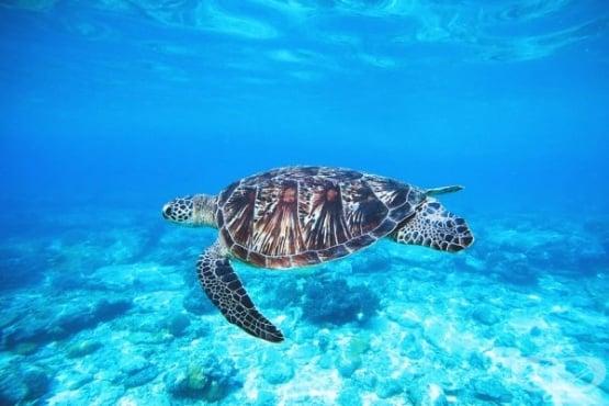 План за спасяването на световните океани - изображение