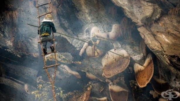 Смъртоносният лов за халюциногенния мед на Непал - изображение