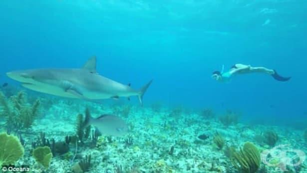 Нина Добрев плува с акулите в подкрепа на благотворителна кауза - изображение