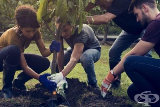Университет стимулира студенти да засаждат дървета - изображение