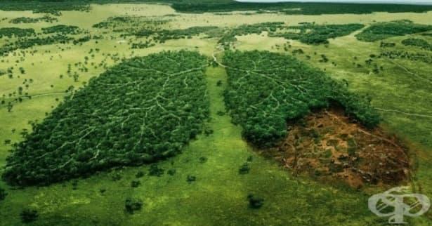 Норвегия повече няма да реже дървета! - изображение