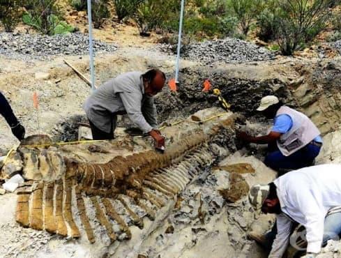 В Мексико откриха изключително добре запазена опашка на динозавър - изображение
