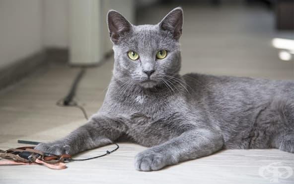 Оказва се, че котките сами са се опитомили – типично за тях, нали? - изображение