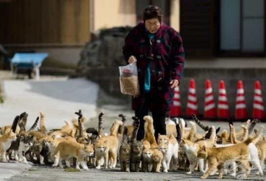 Аошима – японският остров, където котките са 8 пъти повече от хората - изображение