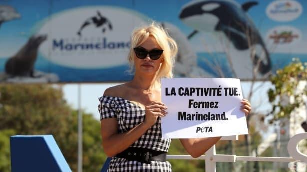Памела Андерсън  протестира в защита на животните пред френски аквапарк - изображение