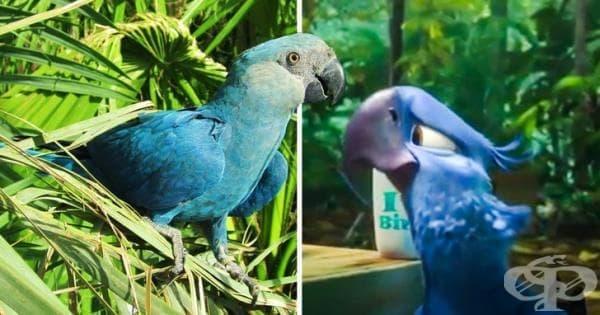 """Синият папагал от """"Рио"""" - изчезнал вид  - изображение"""