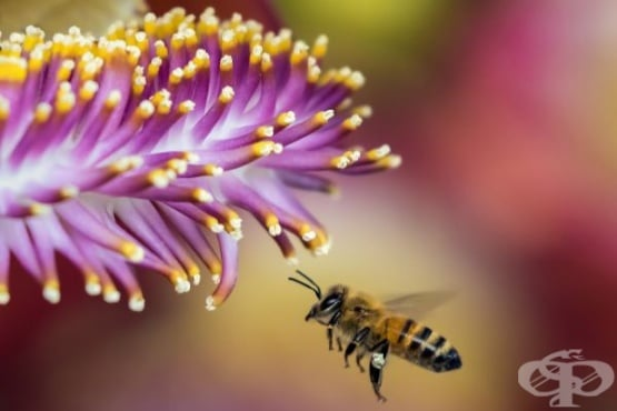 Вижте невероятния свят на медоносните пчели и кошерите отблизо (Видео) - изображение