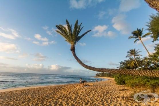 Пет супер луксозни имота в Каилуа, Хаваи - изображение