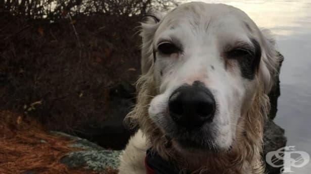 Смело куче спасява собственика и другарите си от нападение на мечка - изображение