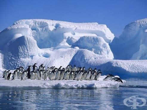 Преди 52 милиона години Антарктида е била покрита с дъждовни гори - изображение