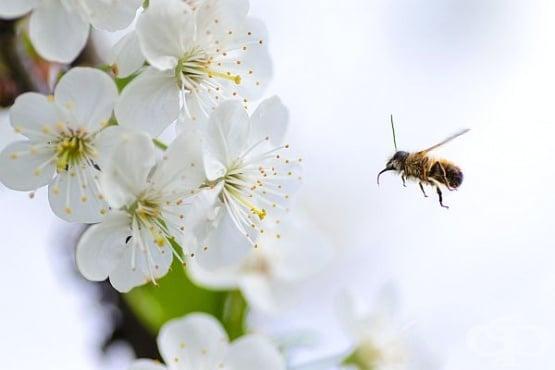 Кои насекоми са полезни за вашата градина? - изображение
