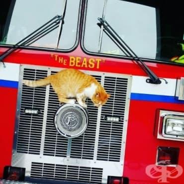 Един ден котарак влиза в пожарната и решава, че остава - изображение