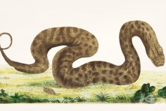 Притча за фермерът и змията - изображение