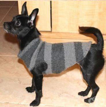 Как да направим дрешка за домашния си любимец от ръкава на стар пуловер (инфографика) - изображение