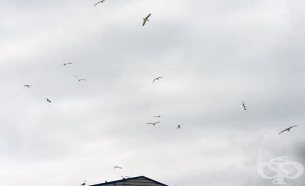 Гневът на чайките - изображение