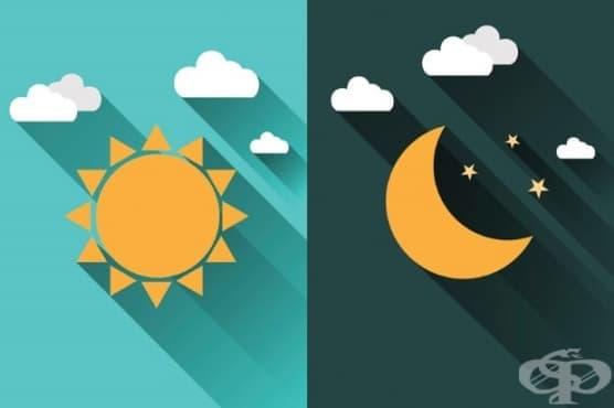 Каква е разликата между ранобудните чучулиги и нощните сови? - изображение