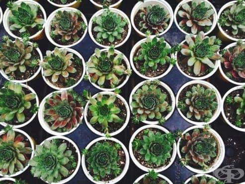 18 стайни растения за начинаещи градинари - Част 1 - изображение