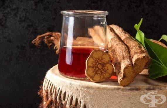 Аяхуаска – растението, което дава отговори за смъртта - изображение