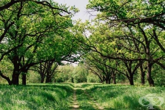 Разходките сред природата подобряват здравето - изображение