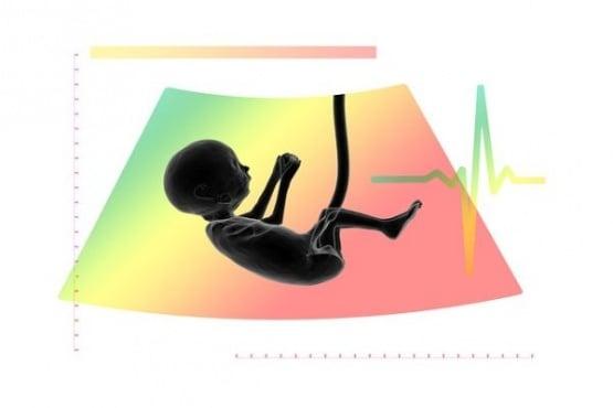 Как се развива вашето бебе по време на бременността - изображение