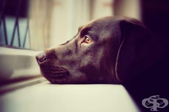 Сам вкъщи: Колко време трябва да оставяме кучето си само у дома - изображение