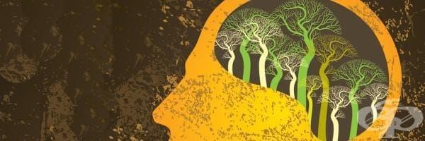 Нашият мозък има сезонен календар: науката потвърждава - изображение