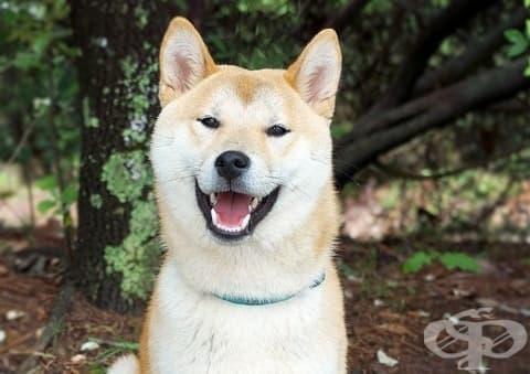 Разгледайте улиците на Япония от гледната точка на куче - изображение