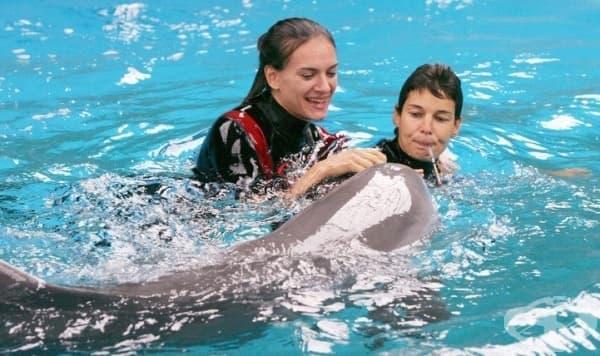 Шоу с делфините: какво се случва зад кулисите в действителност  - изображение