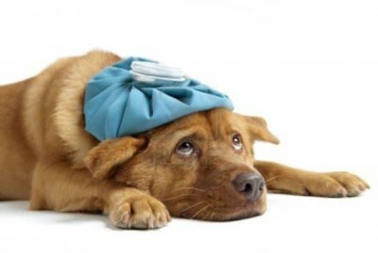 15 признака, че трябва да заведете домашния си любимец на ветеринар – I част - изображение