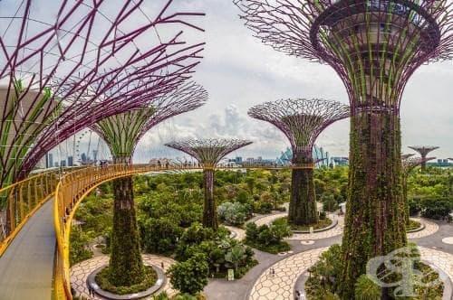 Сингапур – страната на чудесата. Вижте гората от сайбърдървета Supertree Grove и изумителния Cloud Forest - изображение