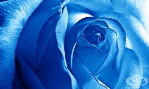 13 интересни наблюдения върху синия цвят и тези, които го обичат! - изображение
